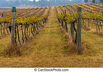 Australian vineyard in winter
