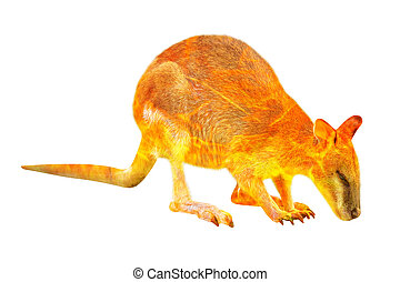 Australian Wallaby in the fire isolated - Composition about ...