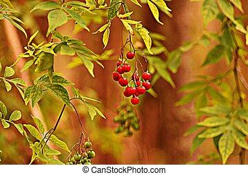 australian wild berries