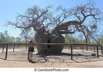 Boab Prison Tree in Derby Kimberley Western Australia