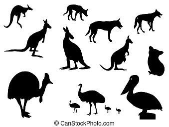 australiano, animais, silueta