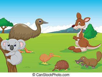 australiano, animales, caricatura, outba