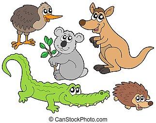 australiano, animales, colección