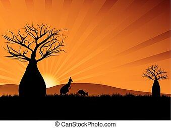 australiano, cangurus, entre, árvores baobab, em, pôr do sol