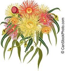 australiano, vetorial, flores, nativo