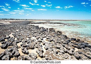 australie, stromatolites