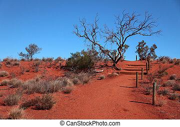 australien, désert