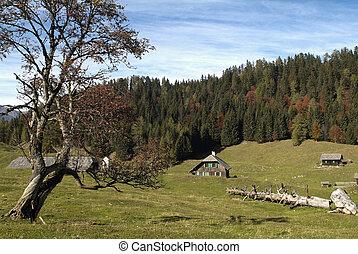Austria, Carinthia - Austria, upland pasture on Weisacher...