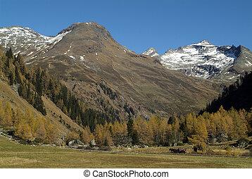 Austria, East-Tyrol - Austria, horse drawn carrige in...