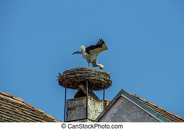 austria, rust. nest of a stork