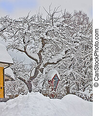 Austria, small red chapel and tree covered by snow