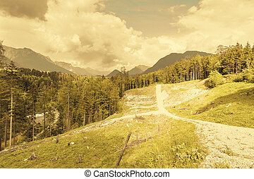 Austrian landscape with forests