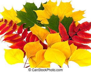 Autamn leaves on a white background