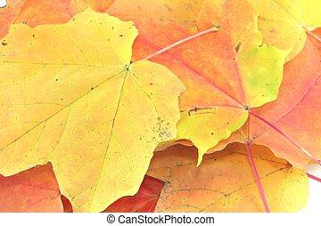Autimn Leaves