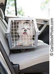 auto, brandkast, dog