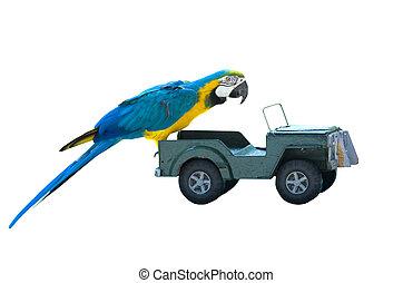 auto, speelbal, vrijstaand, papegaai