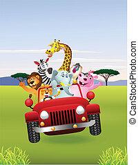 auto, tiere, afrikanisch, rotes