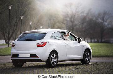 Auto Traveling With Dog. Australian Shepherd in the car. Pet Adventure