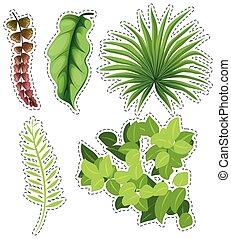 autocollant, ensemble, feuilles vertes