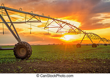 Automated farming irrigation system in sunset - Automated...