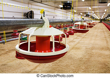 automated poultry farm - The modern and new automated...