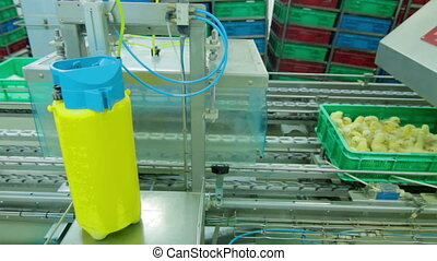 Automatic Chicks disinfection in a Factory