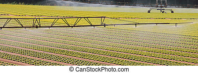 automatic irrigation system on the cultivated field in summer