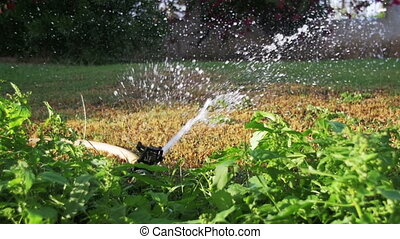 Automatic Lawn Sprinkle on the Garden Green Grass in Slow...