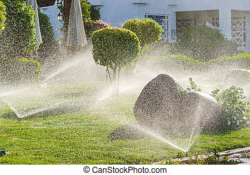 Automatic Sprinkle plants in the garden. Photo for...