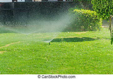 Automatic Sprinkle plants in the garden. Photo for ...