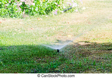 Automatic Sprinkle plants in the garden