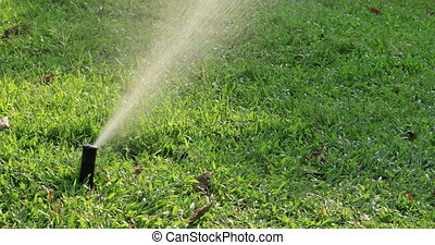 Automatic sprinklers watering green grass