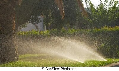 Automatic sprinklers watering green lawns - Slow motion shot...