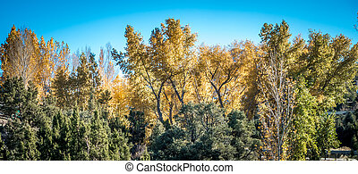 automnal, arbres, leaves., automne, park., automne