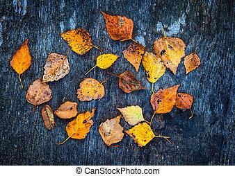 automnal, closeup, feuilles