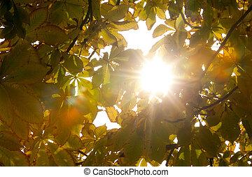 automnal, feuilles, lumière soleil