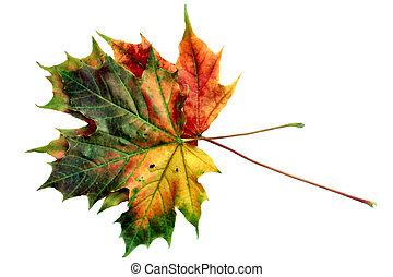 automne, #12, couleurs