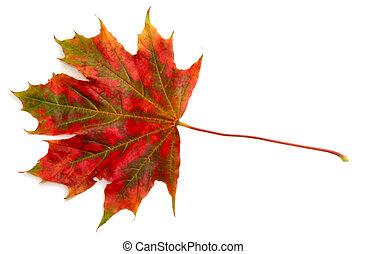 automne, #3, couleurs
