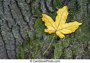 automne, aboiement arbre, feuille