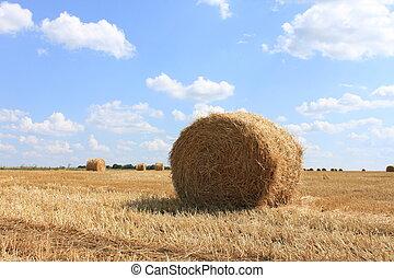 automne, agricole, paysage