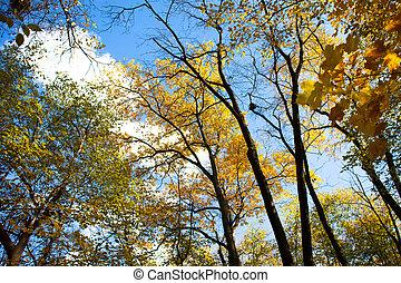 automne, angle, bas, arbres, vue