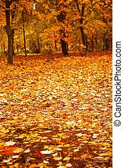 automne, après, parc, pluie