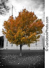 automne, arbre, église
