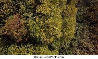 automne, arbre, au-dessus, couronnes, vue