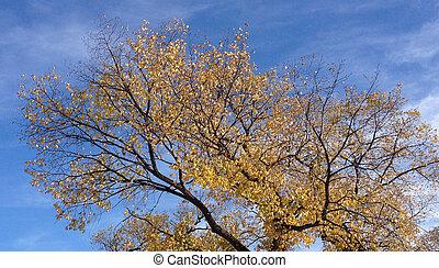 automne arbre ciel - Arbre Ciel