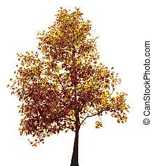 automne, arbre, coloré