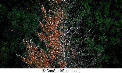 automne, arbre, feuilles, souffler, fermé