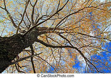 automne, arbre, jaune