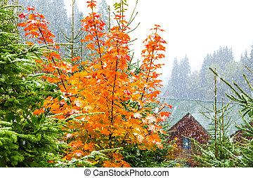 automne, arbre, neige, jaune, sous
