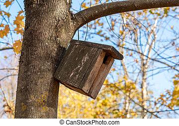 automne, arbre, parc, birdhouse
